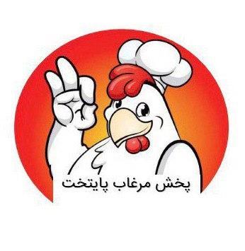 پخش مرغ پایتخت